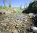 Whangawehi Stream, NZ